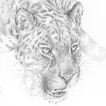 schleichender Jaguar