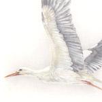 fliegender Storch III