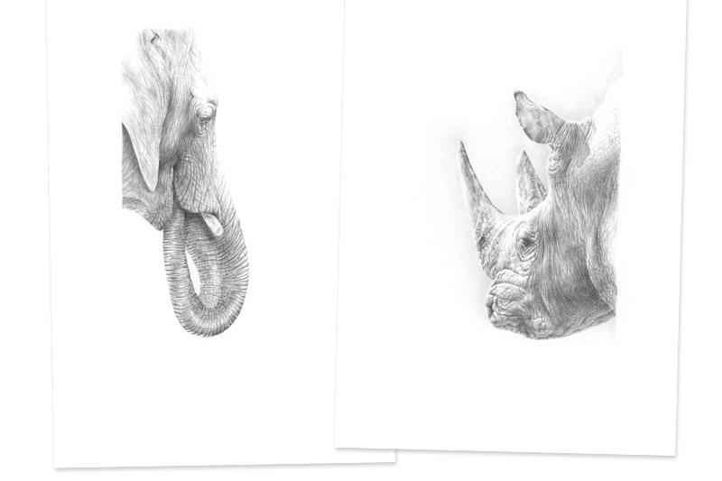 Elefantenportrait und Nashornportrait<br />im Doppelpack