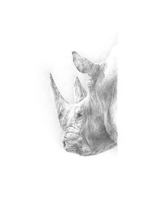 Nashornportrait