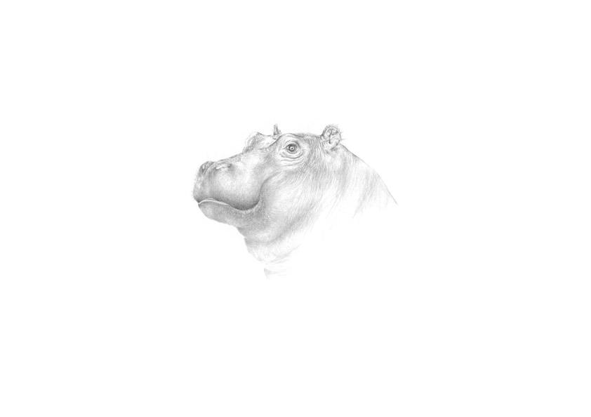 kleines Flusspferd