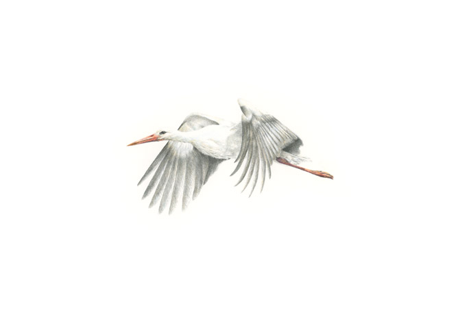 fliegender Storch II
